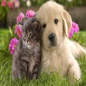 Cat and dog Wallpapers HD