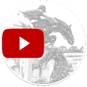 Show Jumping Videos