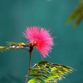 Last Flower Standing by Vaibhav Nahar - Flowers Flowers in the Wild