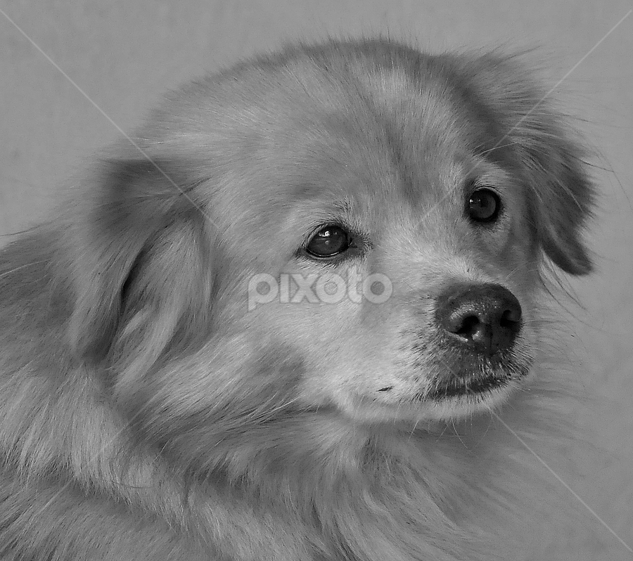 by Cacang Effendi - Black & White Animals ( cattery, dogs, chandra, puppy, animal )