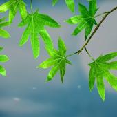 3D Green Leaves