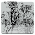 Trees In Fog Live Wallpaper icon