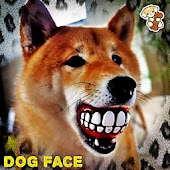 Your Dog Face