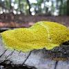 scrambled egg slime