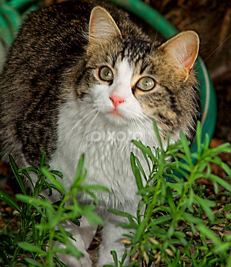 Watching by Kati Garner - Animals - Cats Kittens ( kitten, whute fur, pink nose, furry, bug )