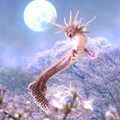 Sakura Dragon Moon
