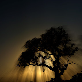 Shadow Tree by Sergio Martins - Landscapes Forests ( tree, portugal, norte, lisboa, shandow )
