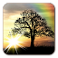 Sun Rise Free Live Wallpaper APK for Blackberry
