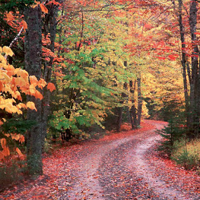 A lovely road in Maine. by Gale Perry - City,  Street & Park  City Parks ( red, maine, nature, colorful, color, green, fall, path, yellow, landscape, curved path, maple,  )