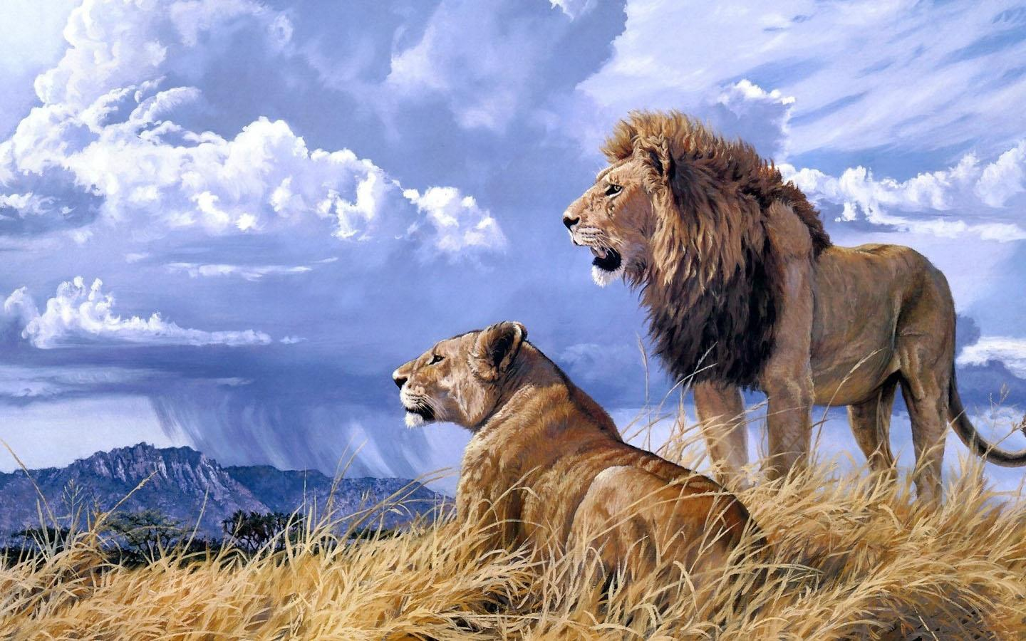 lions hd wallpaper android apps on google play