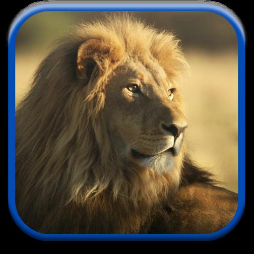狮子动画壁纸 個人化 App LOGO-硬是要APP