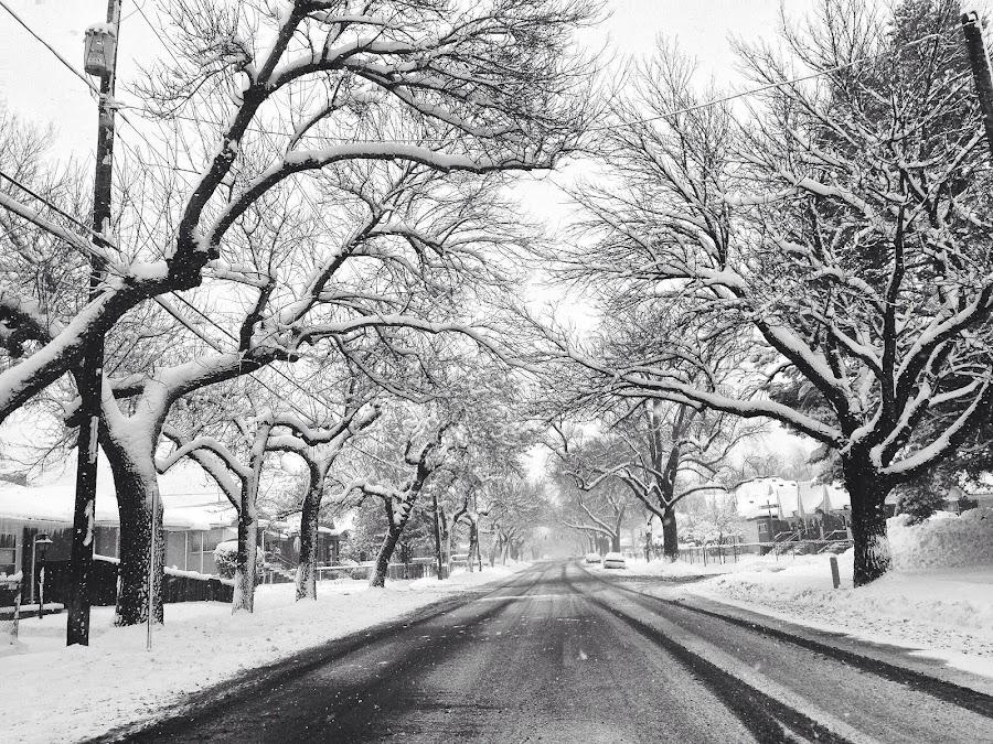 Snowy street by Kasey Chesnut - City,  Street & Park  Street Scenes ( winter, ice, street, snow )