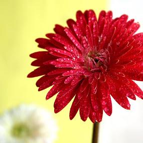 by Devol Nath - Flowers Single Flower