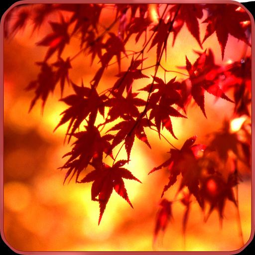 秋の紅葉の壁紙 in京都 個人化 App LOGO-APP試玩