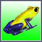 Frog Taps