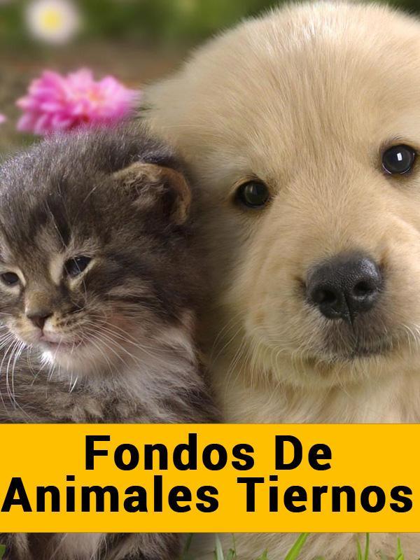 Fondos De Animales Tiernos Android Apps On Google Play