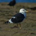 Sea Gull - Baltic Gull
