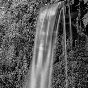Silk Waters by Lynnie Adams - Landscapes Waterscapes ( water, monochrome, long exposure )