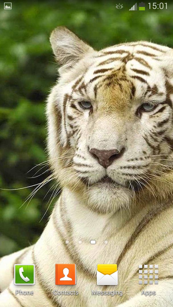 96f6b48281367 Tigre Blanco Fondo Animado - Revenue   Download estimates - Google Play  Store - Ecuador