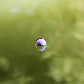Fishing Bobber by Sal 1701 - Nature Up Close Water