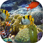 Marine Fish Aquarium HD LWP