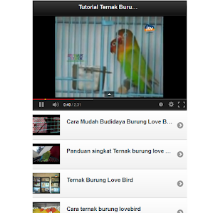 Tutorial Ternak Lovebird screenshot 2