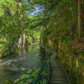 to the wonderland by Yordan Mihov - Landscapes Travel ( park, path, devin, river, bulgaria )