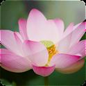 Divine Lotus (PRO)