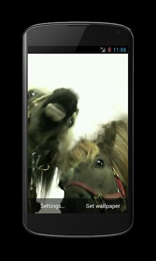 Horses lick screen Video LWP