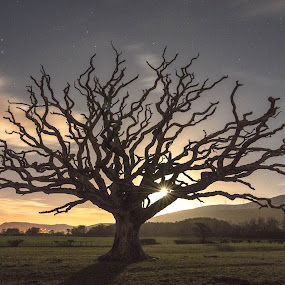 Moonlight silhouette by Don Cardy - Nature Up Close Trees & Bushes (  )