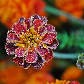 by Olivia Emery - Flowers Single Flower (  )