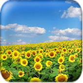 Sunflower Wallpaper Mod