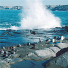 Seagull Jigsaw Puzzle icon