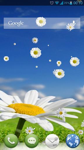 Camomile Flower Live Wallpaper