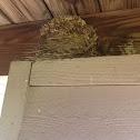 Cardinals nest