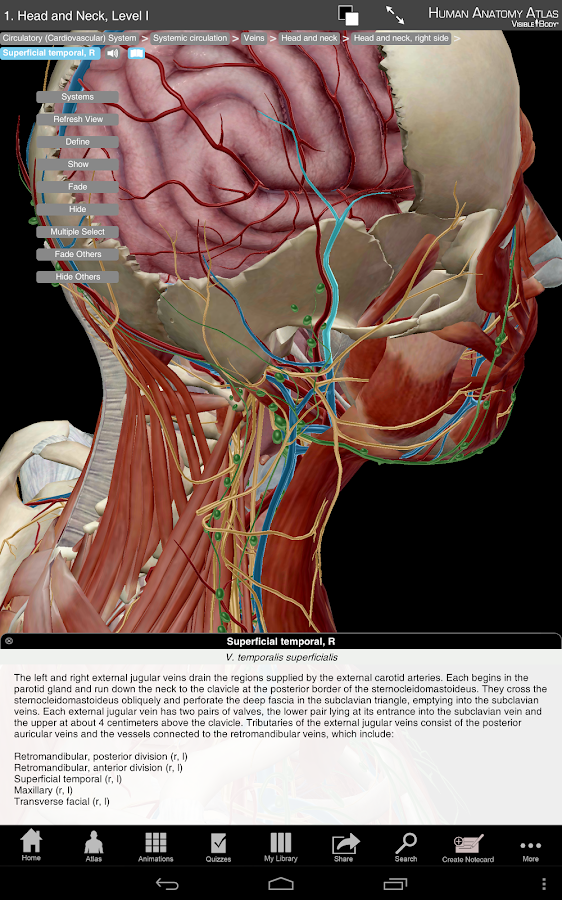 Human Anatomy Atlas - screenshot