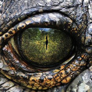 Eye of the Garial.jpg
