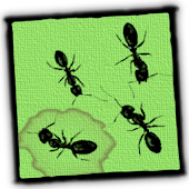 Ants Live Wallpaper Key
