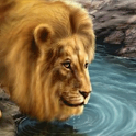 Wonderful Lion Live Wallpaper icon