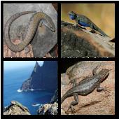 Lizards Live Wallpaper