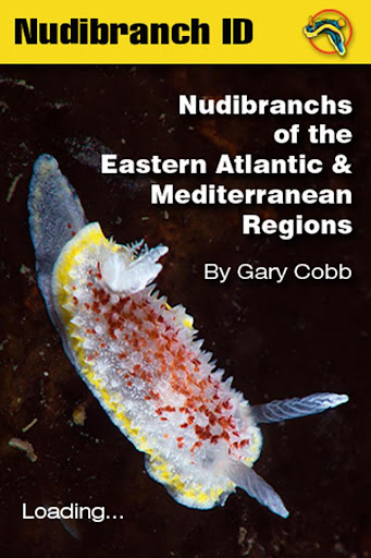 Nudibranch ID EAtlantic Med