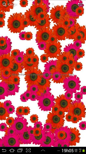 Sunflower Live Wallpaper Pro