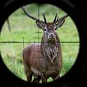 Deer Hunt: Rifle Shot Kill icon
