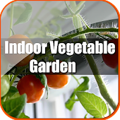 FREE Indoor Vegetable Garden