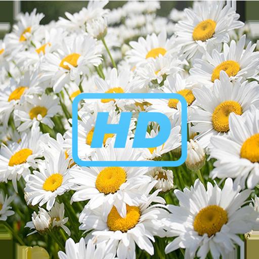 Nature Galaxy S6 Wallpaper  HD