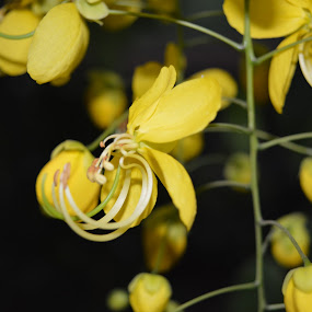 Wild Yellow by Rushi Chitre - Flowers Flowers in the Wild