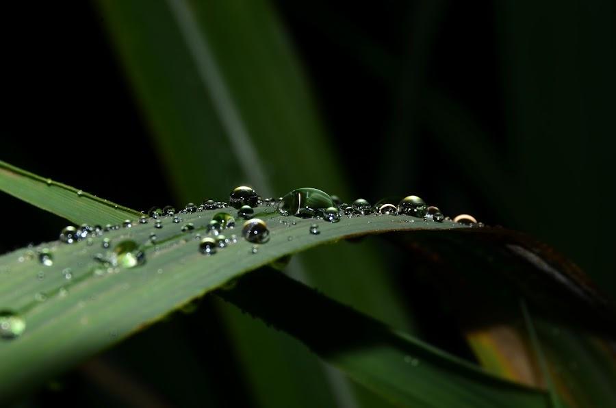 Embun by Aliff Daniel - Nature Up Close Leaves & Grasses