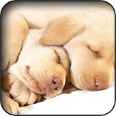 Sleeping Animals Wallpapers