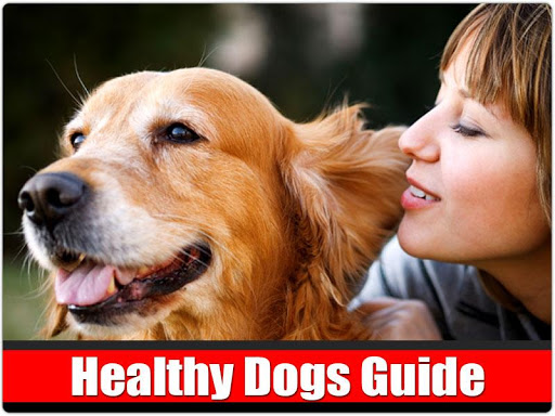 Healthy Dogs Guide Free