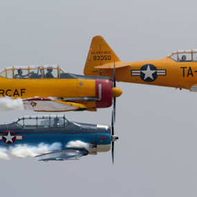 T-6 Formation by Sal 1701 - Transportation Airplanes (  )